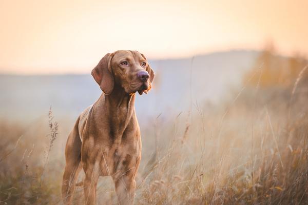 Gå en hundkurs i Stockholm och ha roligt med din hund